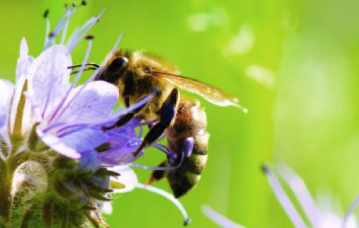 Semaine des fleurs pour les abeilles du 14 au 23 juin 2019